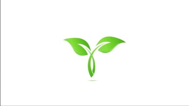 Health Green Leaf. Video Animation