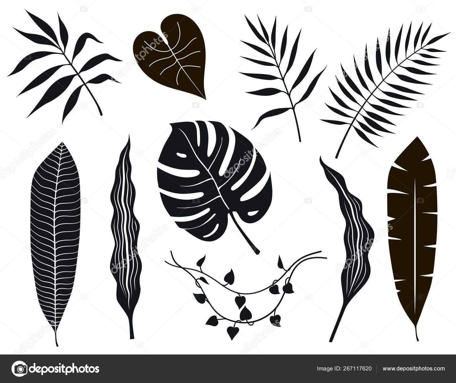 Black And White Tropical Leaves On White Background Stock Vector C Lapuma 267117620 Choose from over a million free vectors, clipart graphics, vector art images, design templates, and illustrations created by artists worldwide! black and white tropical leaves on white background stock vector c lapuma 267117620