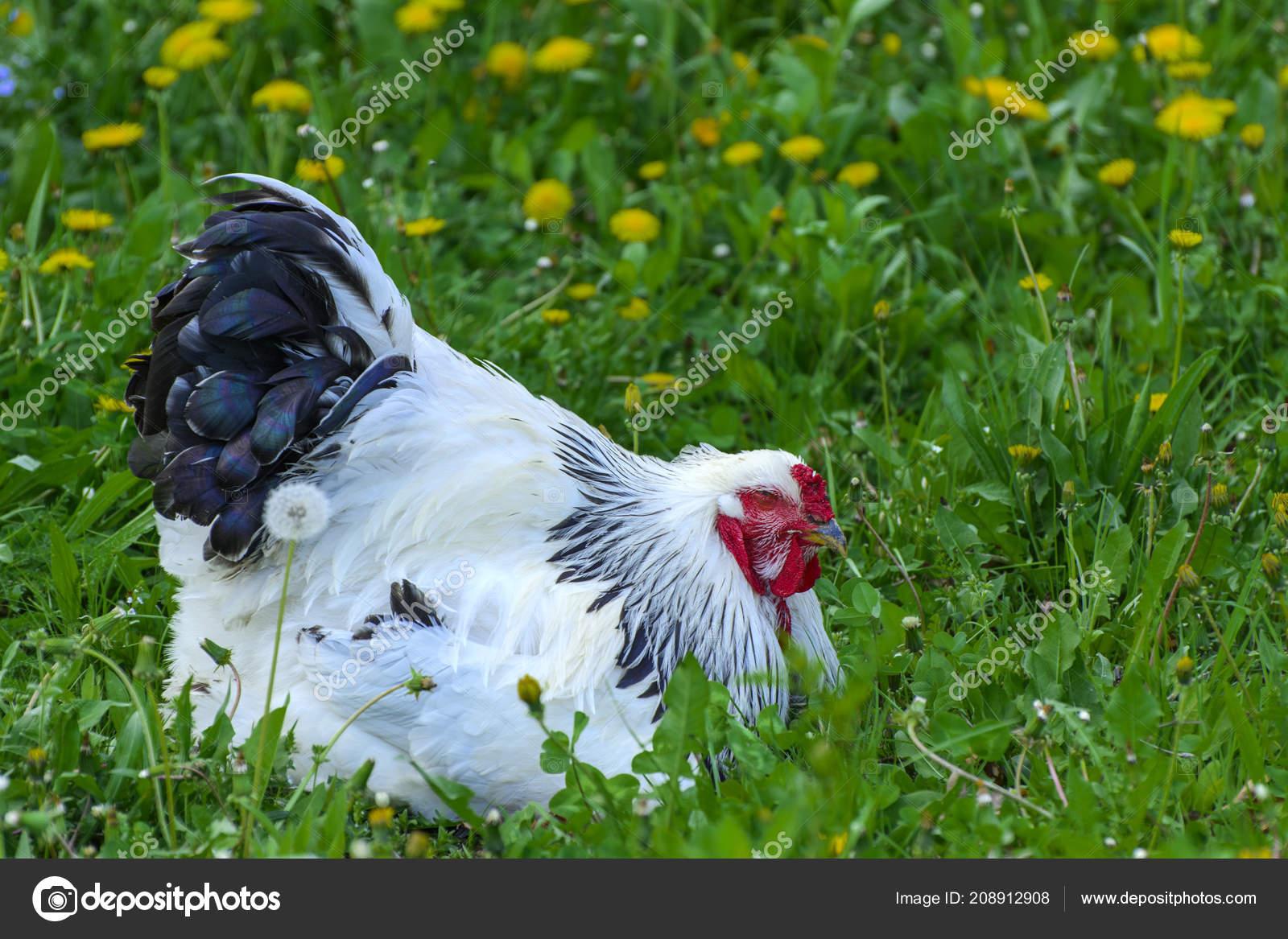 CFNM velké ptáky