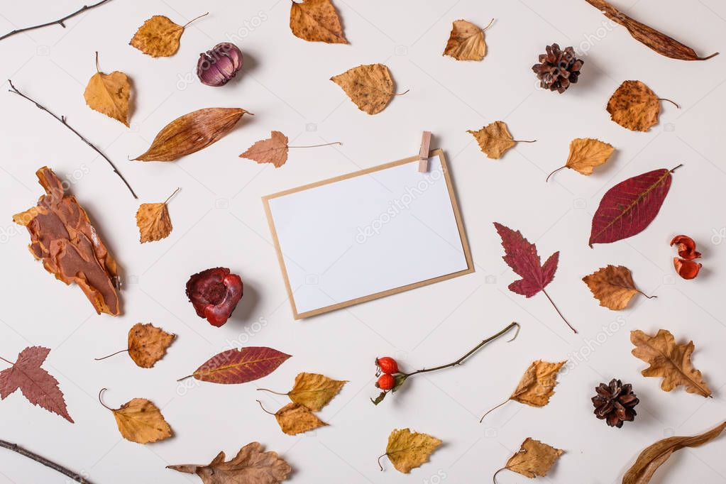 Autumn background: fallen leaves, dry plants, blank stationary template / invitation mock up / empty paper card and clothespins on white background. Top view. Flat lay.
