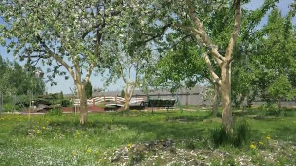 Pomalu padající bílé okvětní lístky v květu jabloní na jaře v zahradě Hd