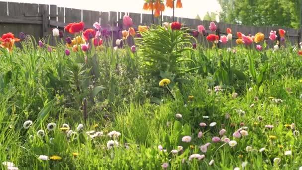 Mnoho krásné světlé květiny kvetou v zahradě