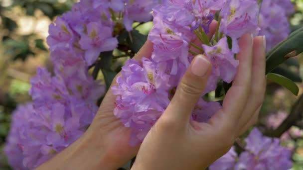 Closeup žena ruce dotýkali fialové květy