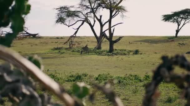 Kobus antilopy a Springbok pasou na zelené louce v africké savaně