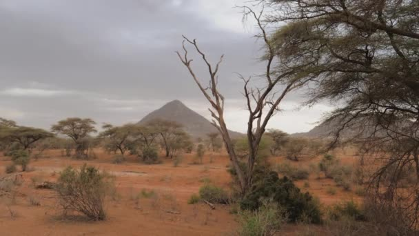 Pohled na trojúhelníkové hory v poušti s červeným pískem a akácie