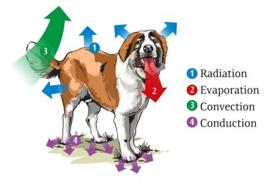 Vector illustration of different ways of heat transfer at the dog. stock vector
