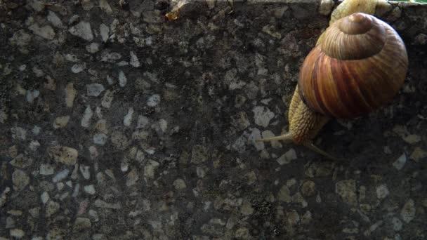 snail crawl with asphalt