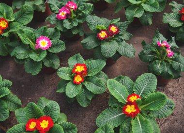 Flowers in pots. Botanical garden.