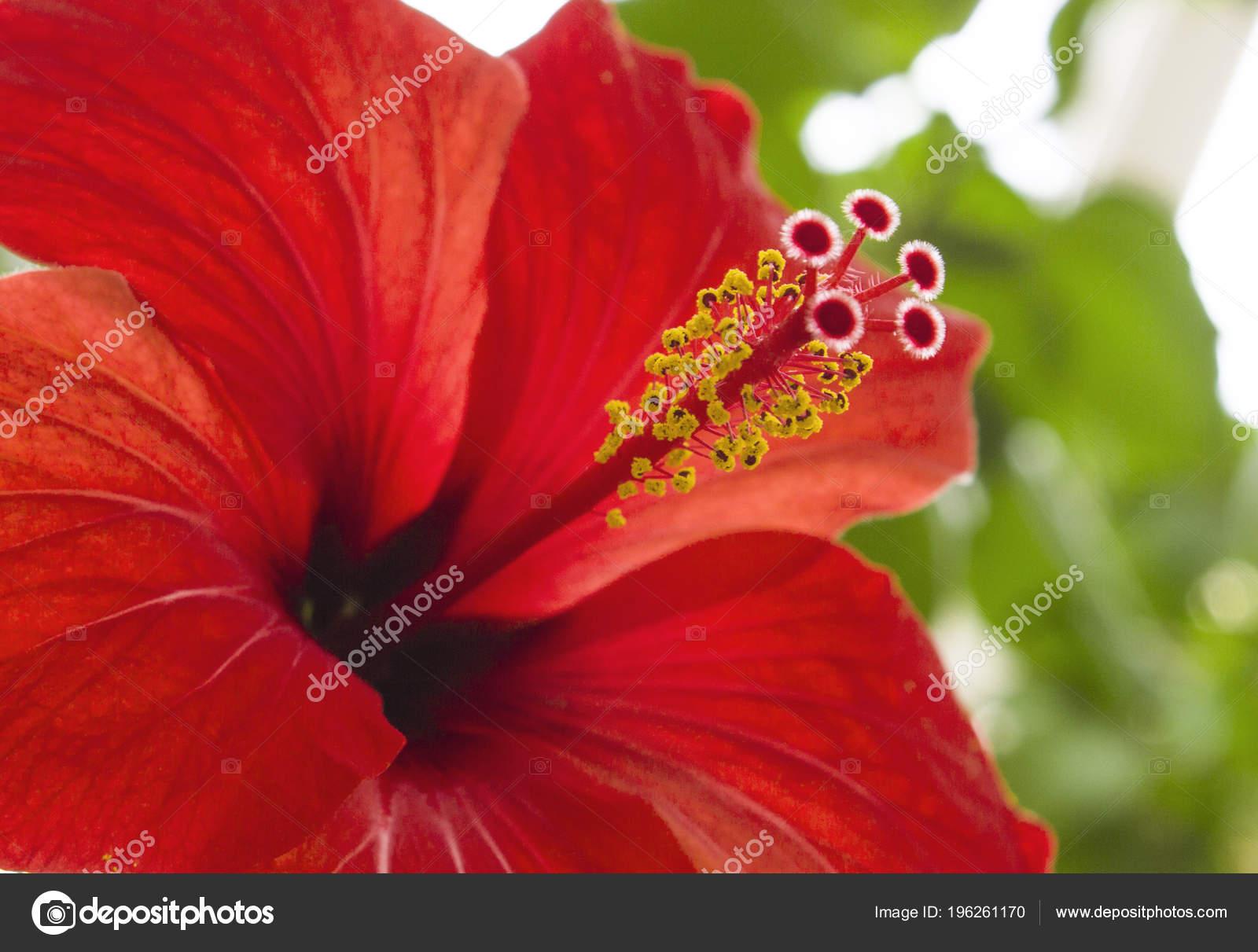 Hibiscus flower macro diagonal texture stock photo shahurin usage information photo hibiscus flower izmirmasajfo