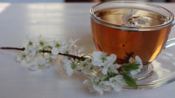 black or green tea. Sakura branch. spring herbal tea