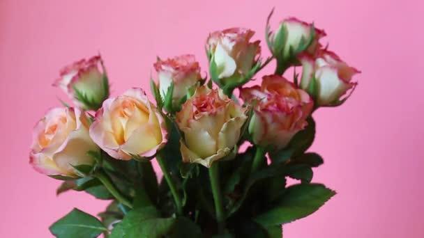 pink roses on a pink background. Rose flower background. Roses flower texture. Lovely rose