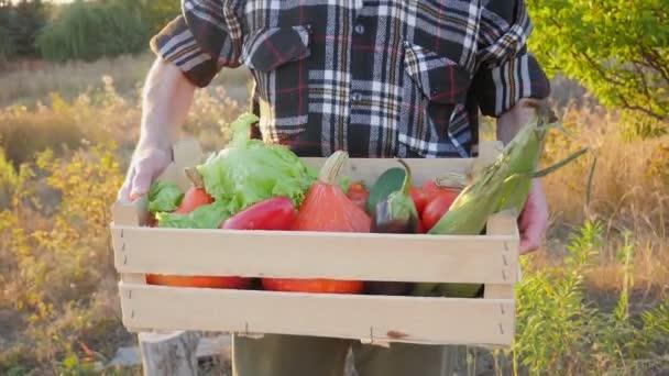 Házi termesztésű zöldségek. Friss bio zöldségek. Zöldségek a kertből. Színes zöldség. Egészséges zöldség egy dobozban. férfi kezében zöldségek.