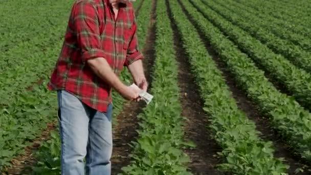 Sedlák spočítaný dolar se zeleným kultivovanými sojové v pozadí