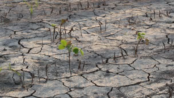 Dürre nach Überschwemmung auf Sojabohnenfeld mit Rissen
