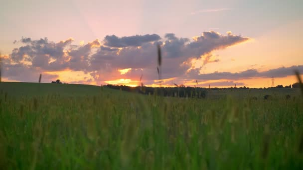 Amazing pink sunset above wheat or rye field, beautiful sky with clouds