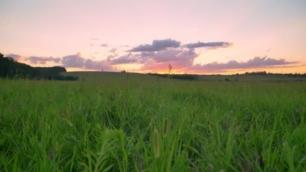 Beautiful sunset above wheat or rye field, pink amazing sky with clouds