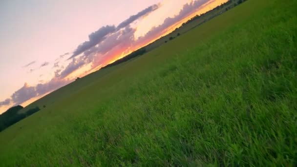 Moving footage of beautiful pink sunset above wheat or rye field, amazing incredible nature