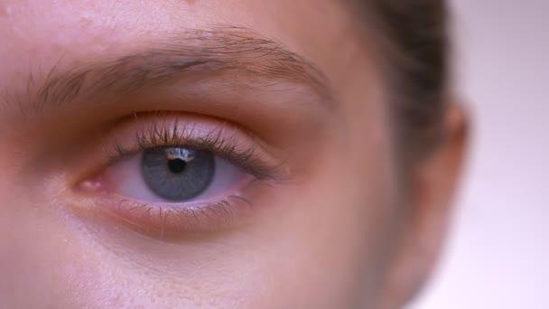 Close-up-Gesicht und fokussiertes blaues Auge der kaukasischen Hündin mit perfekter Haut und glattem Gesicht
