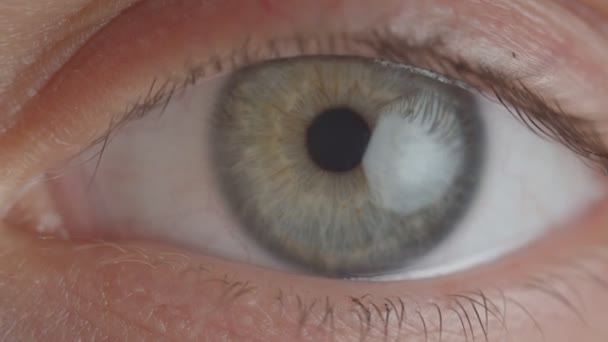 Close-up shoot of green eye with shrinking pupil.