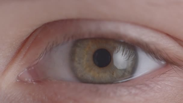 Close-up shoot of greenish eye shrinking fastly the pupil in the state of fear or anxiety.