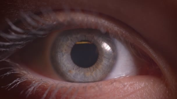Close-up shoot of gray eye with reflection of yellow lamp on it watching into camera in darkness.