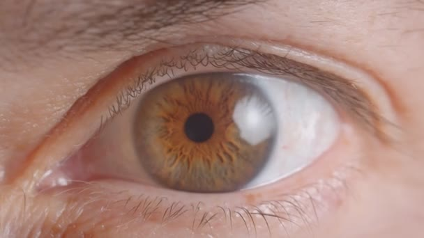 Close-up shoot of caucasian human brown eye shrinking the pupil watching anxiously into camera.