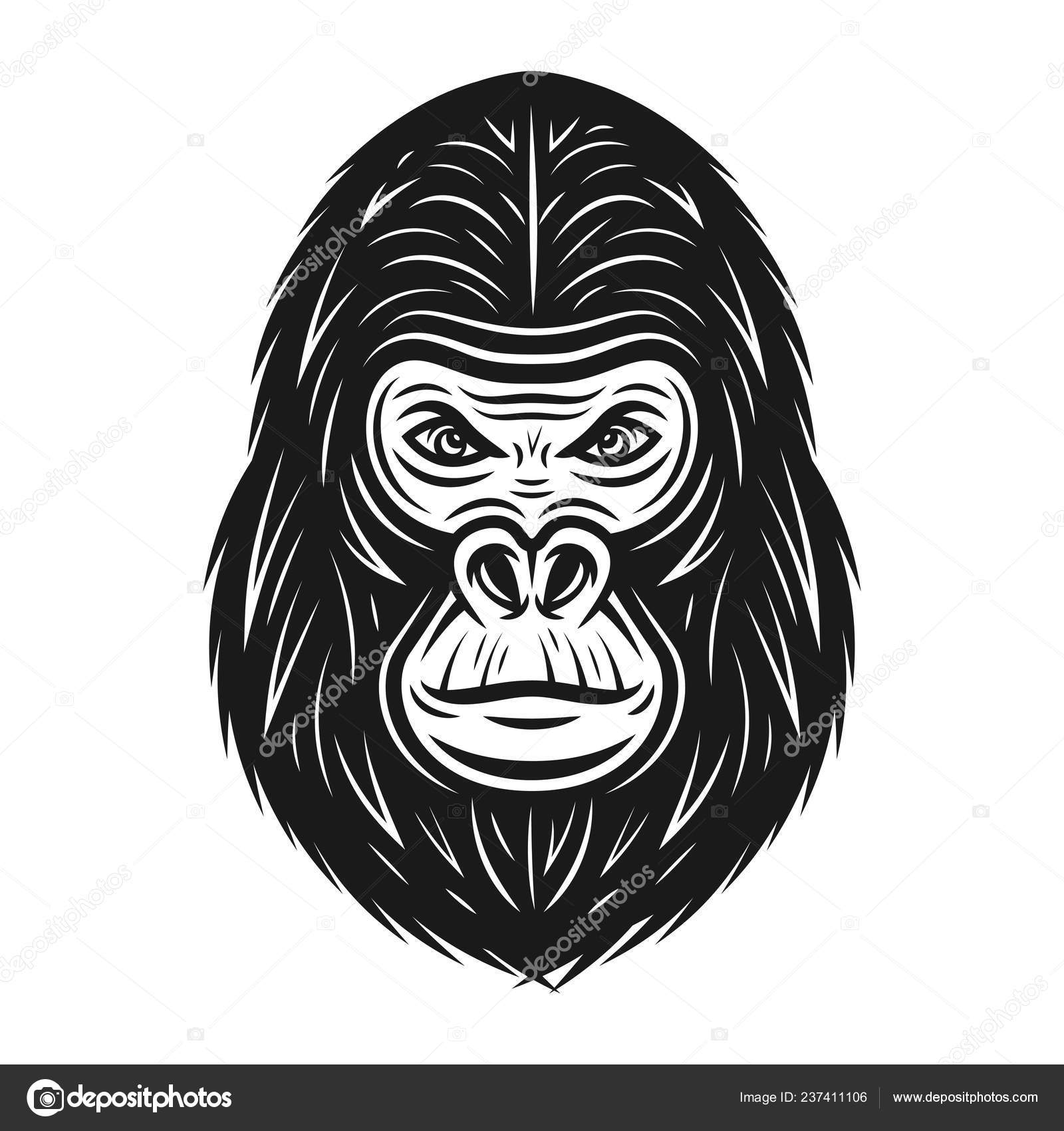 ea67e0ec0 Gorilla head vector illustration in vintage monochrome style isolated on  white background — Vector by Flat_Enot