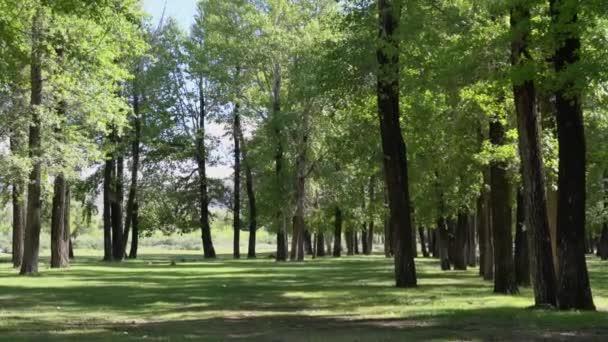 Slunečný den v zeleném lese. Stíny z lesa v trávě. Zvětšit video.