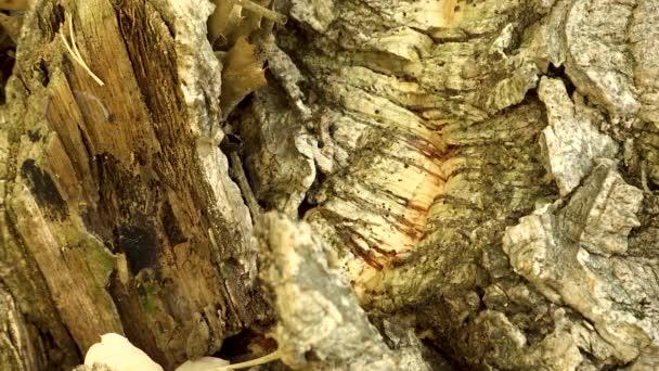 Mravenci v dřevěných hmyzu stromu