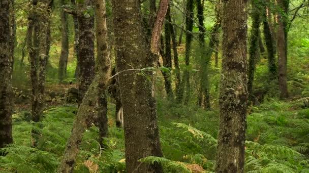 Pohybující se stromy přirozený les