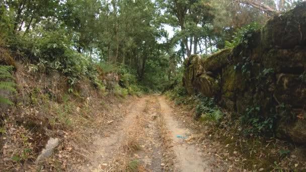 Horská cesta přírody strom