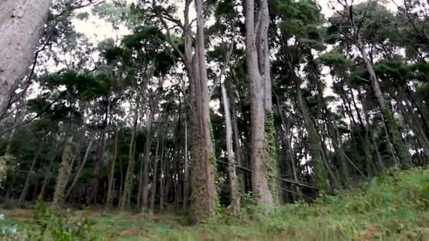Deep Forest, a zöld fák