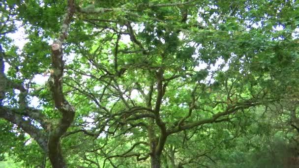 Tmavě zelené stromy v lese