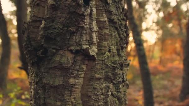 az erdő, a napfény