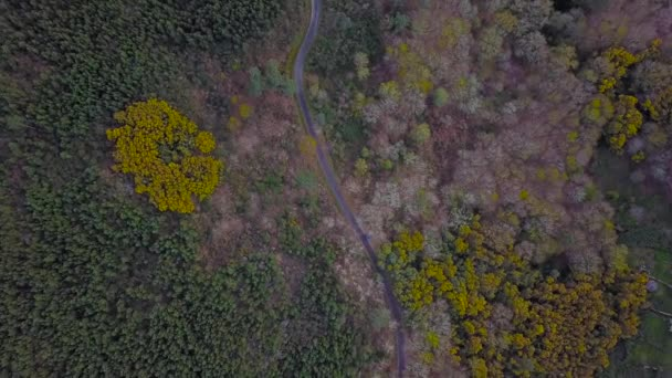 AERIAL VIEW OF TREES AND A ROAD