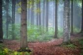 őszi táj az erdőben