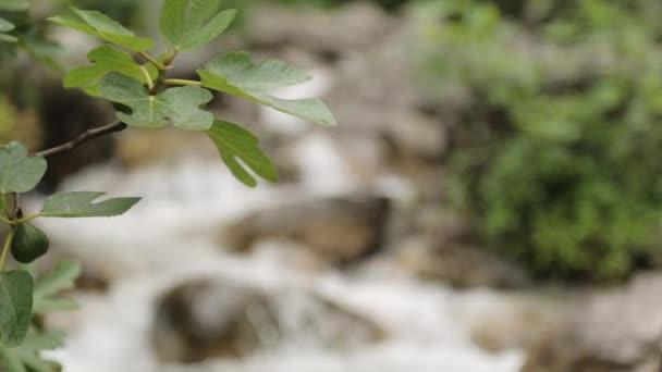 Krásný horský vodopád v Černé hoře. Atmosférická příroda a horská řeka.