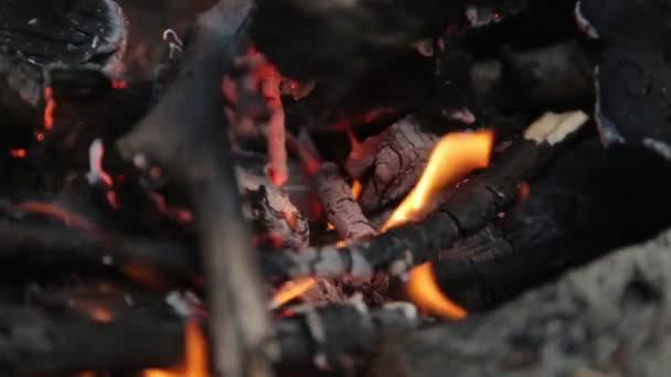 Požár a uhlí v lese v makru. Pálení větví na piknik.