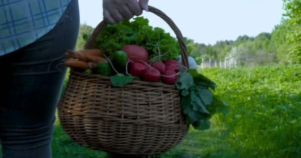 Farmář žena pracující v zahradě, drží v ruce dřevěný box s čerstvým zeleným zralé cibule brambor, těší dobré sklizně