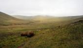 geringer Nebel über Lankrigg-Moos