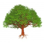 Cartoon big green tree isolated on white background.