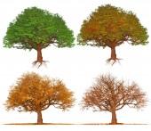 Fotografie Four season trees isolated on white background , illustration art