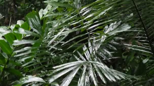 Palmového listí třes