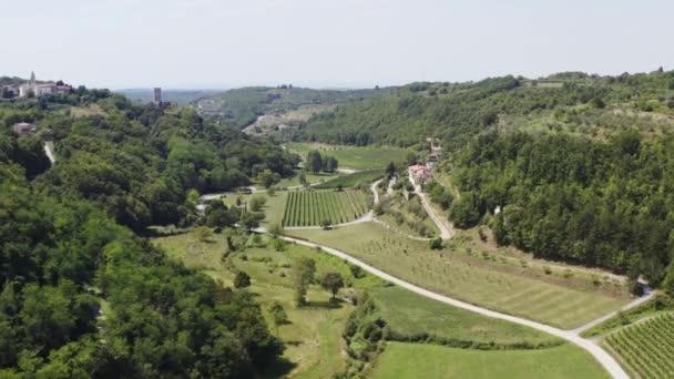 letní vinice pole