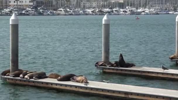 Lachtani v docích krásný přístav
