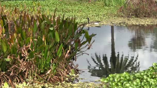 Reflection of a palm tree in a pond in the early springtime