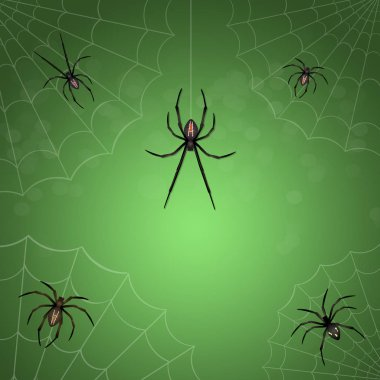 illustration of spiders net on green background