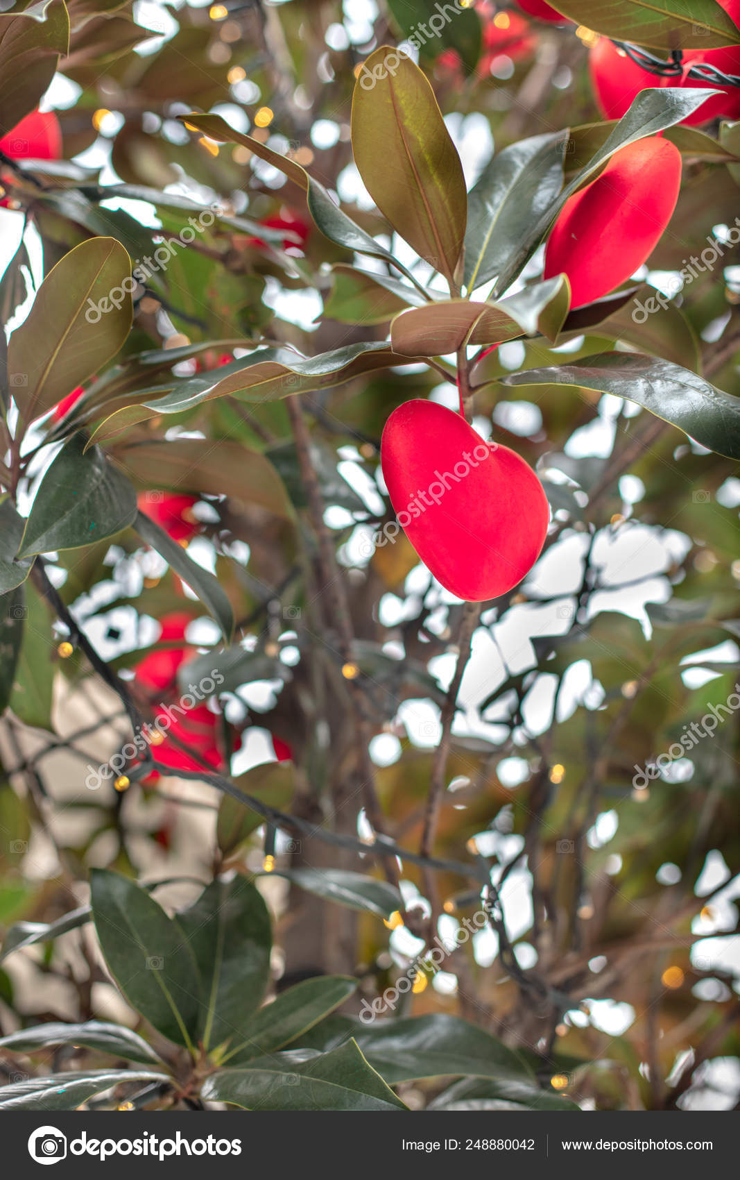 Red Hearts Hanging On Branches Of Magnolia Tree Stock Photo