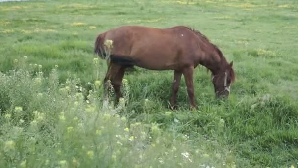 Horse grazing by the River. Rural landscape.