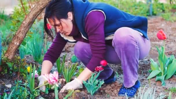Zavřete záběr ženy výsadby flowes ve své zahradě